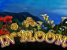 IGT – In Bloom