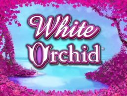 IGT – White Orchid